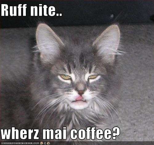 cat wants coffee